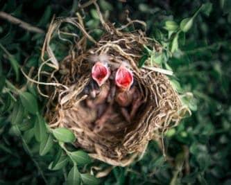 Nest Bank: Program Poleceń inny niż wszystkie!